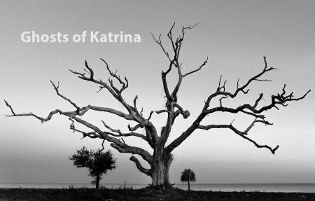 JOHN FITZHUGH/SUN HERALD Katrina Trees, Long Beach, Feb. 12, 2015